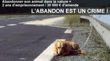 abandon-crime