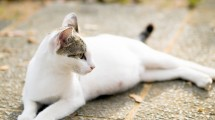 chatte gestation